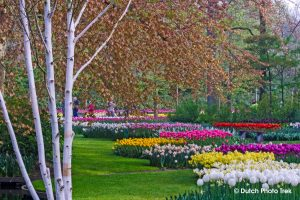 Guided photography tour of Keukenhof