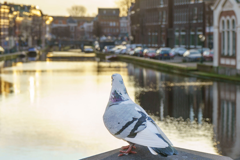 Welcome to Dutch Photo Trek